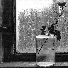a rose is a rose is a rose... (II) (j.p.yef) Tags: bw stilllife flower window monochrome rose sadness mood sad dirty sw yef dirtyglass peterfey jpyef