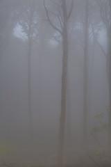 IMG_3458 (ZoRRaW photography) Tags: mist tree fog forest spring luxembourg neuhausgen