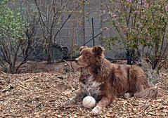 A Favourite Place (Jo-Feels Like Winter Out There!) Tags: fun backyard play large run roam ddc 1611 afavouriteplace