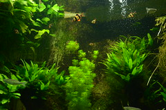 Stuttgart (lyalyana99) Tags: blue fish green nature animal wow wonderful amazing nice omg animallife