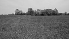 OBERFELD LANDSCAPE 16x9 B+W (Mike Reval) Tags: bw germany landscape darmstadt oberfeld