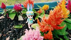 Sonny Angel Easter Bunny (kibblesthepig) Tags: angel easter toy dreams sonny 2016