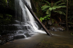 something always reminds me (keith midson) Tags: longexposure tree water forest canon flow waterfall rainforest 28mm sigma tasmania wilderness lilydale lilydalefalls 5dmkiii