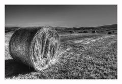 Tuscany Fields (kurtwolf303) Tags: italien bw italy topf25 field landscape blackwhite topf50 topf75 scenery europe italia 500v20f harvest feld tuscany sw toscana topf150 landschaft topf100 haybale 800views acker ernte toskana grainfield strohballen schwarzweis 900views 1500v60f 1000v40f 250v10f monochromefineart flickrelite unlimitedphotos canoneos600d kurtwolf303
