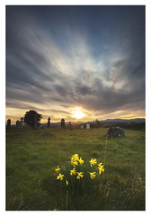 daffodils (dunne_s) Tags: flowers ireland sky cemetary second daffodils kildare