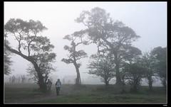 IMG_1358 (c0466art) Tags: light beautiful grass fog creek canon landscape scenery atmosphere mysterious land 1dx c0466art