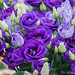 """2016_04_17_Floralia_Bxl-112 • <a style=""""font-size:0.8em;"""" href=""""http://www.flickr.com/photos/100070713@N08/26443358741/"""" target=""""_blank"""">View on Flickr</a>"""