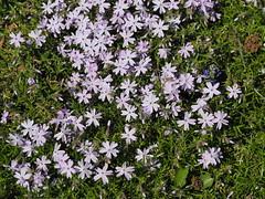 mozirski-gaj_46 (carlo) Tags: flowers olympus slovenia slovenija fiore botanicalgarden omd em1 ortobotanico giardinobotanico mozirje mozirskigaj