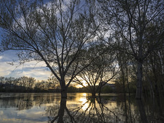 Crecida (Jos Varela) Tags: ro contraluz atardecer agua olympus reflejo rbol zuiko omd em1 duero