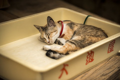 2 (Onejoshuatree) Tags: west animal japan cat snap hiroshima     onomichi