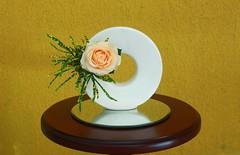 A rose for you (Ligia Miranda) Tags: rose ikebana rosa brasileirinho girlanda sangetsu