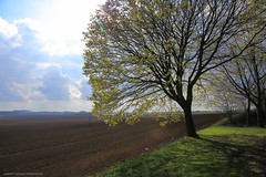 After the rain, spring 2016 (Laurent Castiau) Tags: light sky tree nature field clouds canon landscape countryside lumire naturallight wideangle depthoffield ciel nuages paysage campagne arbre contrejour champ lumirenaturelle againstthelight canoncamera canonlens grandangle profondeurdechamp