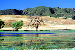 Benito County Wetlands, Southern California (Vern Krutein) Tags: travel trees usa nature water landscape scenery natural hills wetlands archives historical wilderness southerncalifornia scenes scenics geoform geologicalform npsv04p1506 southbenitocounty