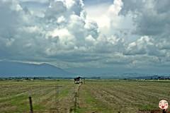 OTW Kota Belud-Kota Kinabalu (fikqriey_94) Tags: malaysia sabah paddyfield naturalist sabahan kotabelud northborneo travelicious