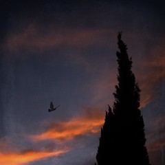 Silhouettes (emilioramos59) Tags: trees sunset textures nwn