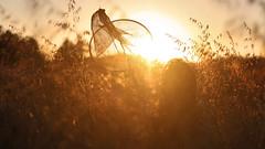 121/366: chasing the sun II (Andrea  Alonso) Tags: light sunset red portrait naturaleza sun selfportrait cute net sol me nature beautiful field atardecer freedom retrato galicia rays 365 autorretrato vigo 366