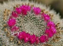 Spring 2016 - 829 LBG. (Lostash) Tags: life flowers plants nature spring flora seasons leicesterbotanicalgardens