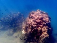 Big Island Reef (incidencematrix) Tags: ocean beach coral hawaii underwater shore bigisland reef