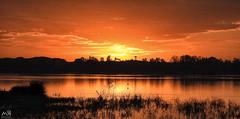 Nikon coolpix P900. Doñana. Dec 2015_1 (MSB.Photography) Tags: sunset lake bird nature water animal fauna landscape atardecer agua zoom wildlife paisaje p900 ave rocio pájaro marshes doñana elrocio nikoncoolpix marismas