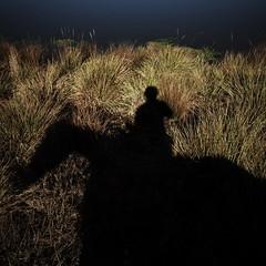 (brianfm) Tags: california shadow horses horse silhouette bay bodega bodegabay horsebackriding