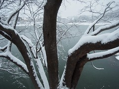 Radially (murozo) Tags: winter snow tree japan cherry pond 桜 日本 木 雪 冬 akita 秋田 沼 nikaho にかほ