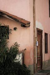 pink (Martina Semeraro Photo) Tags: street city pink light italy canon lens 50mm flickr italia shore 18 550d