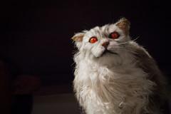 (Cathy G) Tags: uk orange cat canon eyes feline harrypotter prop hertfordshire watford orangeeyes lseries canon24105mm canon7d harrypotterstudiotour