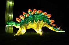 Dinosaur Lantern 3 (pokoroto) Tags: autumn canada calgary night zoo october dinosaur alberta lantern 10 2015     kannazuki   themonthwhentherearenogods 27