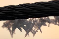 Eiskristalle (02) (Rdiger Stehn) Tags: winter deutschland europa makro eis raureif nahaufnahme schleswigholstein gegenlicht reif 2000s norddeutschland 2016 mitteleuropa makrofoto eiskristalle drahtseil makrofotografie 2000er canoneos550d