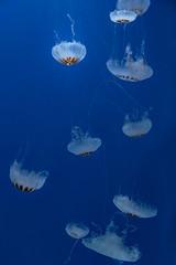 Medusa Selfish Acuario Inbursa (Bruno Prez) Tags: selfish medusa acuario acuarium aguamala inbursa