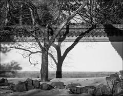 Une ombre (josboyer) Tags: de jardin ombre arbre chine jardinbotaniquedemontréal