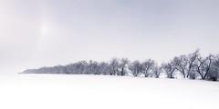 Fading into the sundog (Sandra Herber) Tags: winter snow canada alberta sundog parhelia minamalist sunhalo