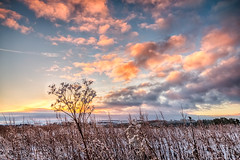 Sunrise - Estate 14/02/2016 (Chris Shanks) Tags: plants colour grass sunrise landscape weeds sigma wideangle tall 1020mm hdr lightroom hdrefex