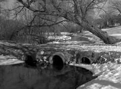 cottonwood and culverts (Paul Lundberg) Tags: bridge creek blackwhite cottonwood rodinal mamiya645 kodaktmax100 epsonv550 sekorc55mmf28