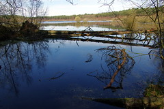 25.3.16 Delamere Forest 51 (donald judge) Tags: trees water forest countryside cheshire mere delamere