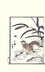 Foxtail millet and Japanese quail (Japanese Flower and Bird Art) Tags: flower art japan japanese book picture japonica poaceae foxtail quail woodblock italica kosa ukiyo setaria urakawa phasianidae coturnix readercollection milllet