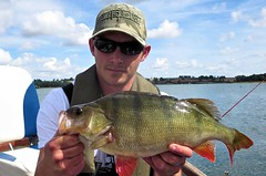 Perch 5 (TheLureBox) Tags: perch pike zander pikefishing perchfishing lurefishing zanderfishing predatorfishing