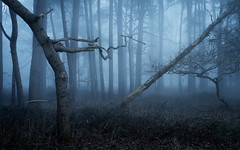Warlock (jellyfire) Tags: trees mist fog zeiss forest landscape woods moody sony serene atmospheric landscapephotography knettishallheath zeissdistagont18mmf35ze sonya7r sonnartfe55mmf18za leeacaster wwwleeacastercom