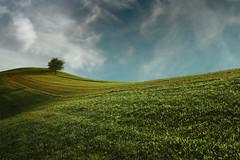 Wonderful World... (palma13) Tags: travel trees tree nature colors field landscape nikon colours natur fields