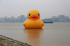 IMG_6489 (Roy Fong 315) Tags: yellow duck rubber rubberduck
