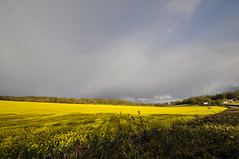 yellow 121/366 (dawn.v) Tags: uk england yellow landscape spring nikon dorset april fields crops wideanglelens 2016 maybankholidayweekend rapeseedoil 2016yip 366daysin2016