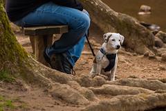 SLN_1602739 (zamon69) Tags: people dog tree water animal puppy person se skne sweden hund human vatten trd djur valp skralid