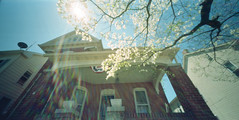 wppd_2016_our_house (Judy M. Boyle) Tags: holga expiredfilm wppd worldpinholeday worldwidepinholephotographyday kodakportra160nc holgawpc unicolorc41 filmphotographyproject wppd2016