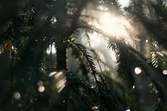 After the rain (annaariina) Tags: canon suomi finland spring mac bokeh sigma sigmalenses valokuvaus canoneos550d