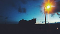 Horsey Friend (sophieghoyle) Tags: horse lamp silhouette night evening countryside streetlight dusk yorkshire country