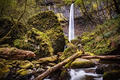 The Convergence (Trent's Pics) Tags: trees wet water waterfall rocks columbia waterfalls gorge columbiarivergorge elowahfalls