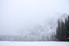Easter snow (Dan Forzano) Tags: california ca trees usa snow fog us spring yosemite yosemitenationalpark