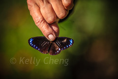 Taiwan-121113-219 (Kelly Cheng) Tags: travel color colour green tourism nature animals horizontal fauna butterfly daylight colorful asia day taiwan vivid colourful traveldestinations  northeastasia