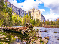 View of El Capitan from the Merced River (Cathy Lorraine) Tags: california park blue trees sky reflection sunshine clouds forest reflections river landscape outdoors united merced el national yosemite granite states springtime capitan