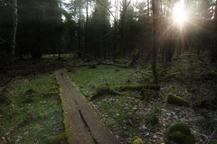 primeval forest (Rainer Schund) Tags: sun nature sunshine forest spring nikon nebel natur grn sunrays wald morgen morgens primeval rawentwicklung nikond700 naturemasterclass natureexploring rainerschund